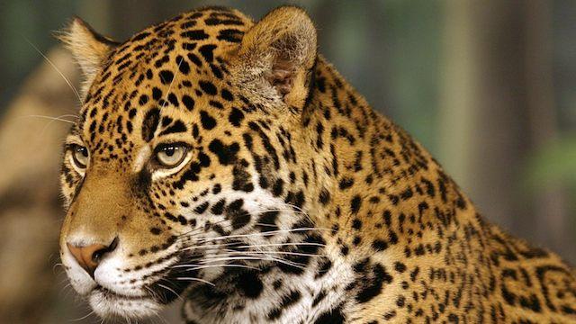 На страже дикой природы в зоопарке Милуоки, IP-камеры AXIS